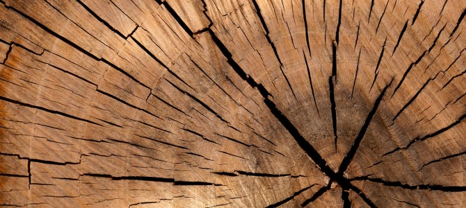 Cómo identificar madera fácilmente